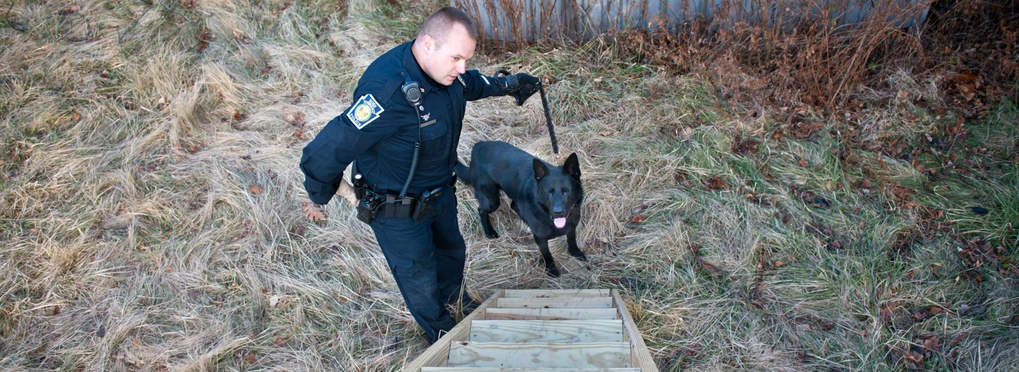 K-9 doing obstical course